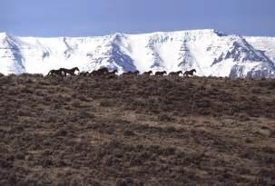 Eplanning Upi   2017 challis herd management area wild horse bait trap
