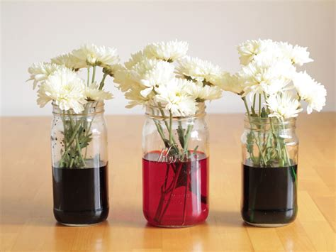 coloring flowers with food color pin changing carnations where does the water go when a