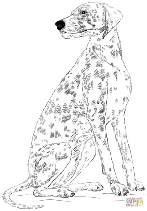 dalmatian dog coloring page dalmatian dog coloring page free printable coloring pages