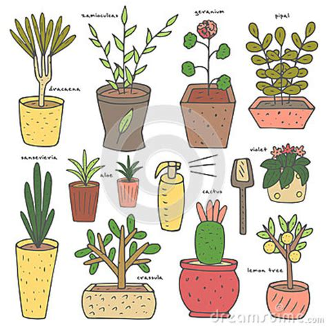 cute plants cute hand drawn doodle house plants collection stock
