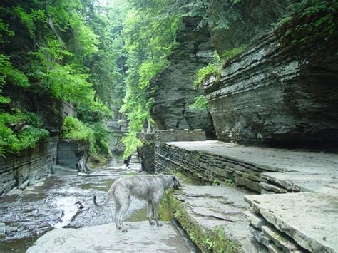 Robert H Treman State Park Cabins by Ithaca A Place For Dogs Information For The Visitor