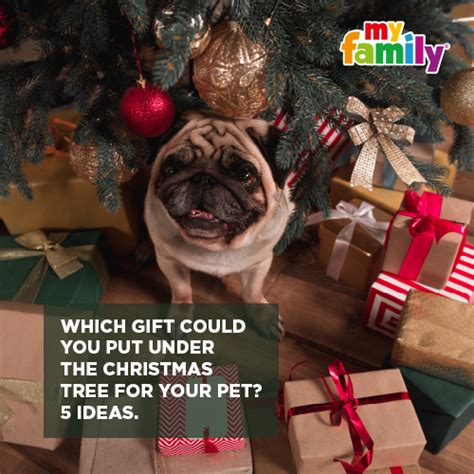 the tree could not put which gift could you put the tree for your pet five ideas myfamily