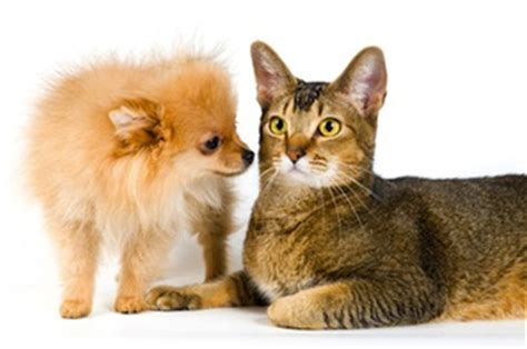 are cats smarter than dogs science says dogs are smarter than cats