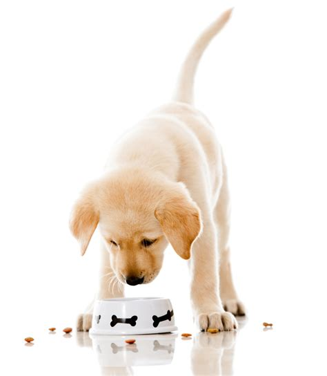 how do puppies eat puppy food why do dogs get sensitive stomachs dogslife breeds magazine