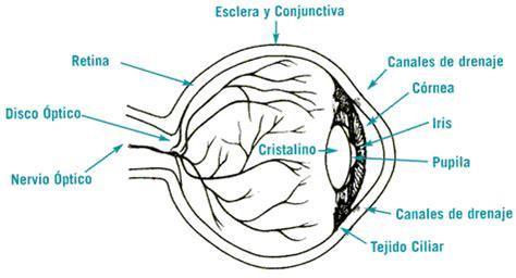 imagenes de ojos por dentro 191 qu 233 es el glaucoma glaucoma research foundation
