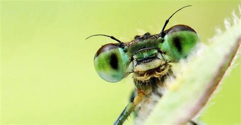 insectanatomy free insect animal pictures gallery insects are awesome ted talks