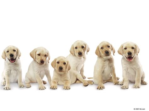 amazing free dog wallpapers to download graphicmania dogs wallpapers collection for free download