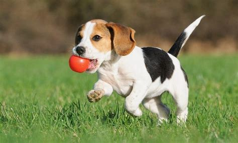 do dogs remember their puppies how much exercise does a puppy need tips on how to keep your pet healthy