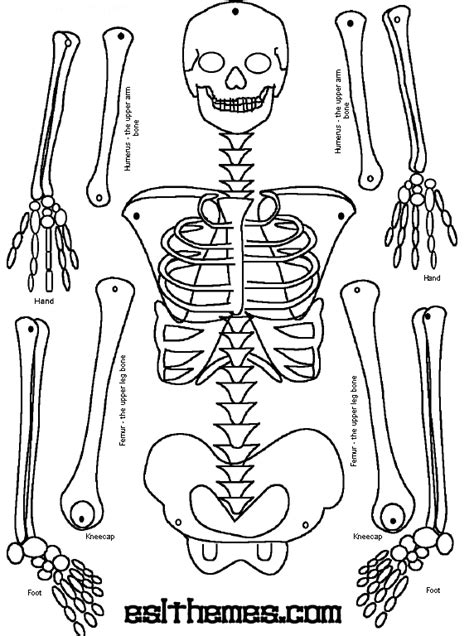 printable label the skeleton make a paper skeleton to label bones school pinterest