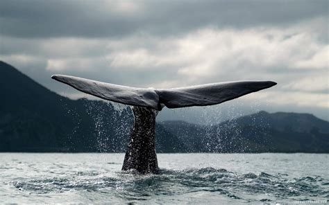 whale wallpaper wallpaper ideas