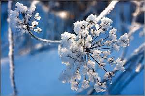 winter flowers winter flower alexander shubin pixdaus