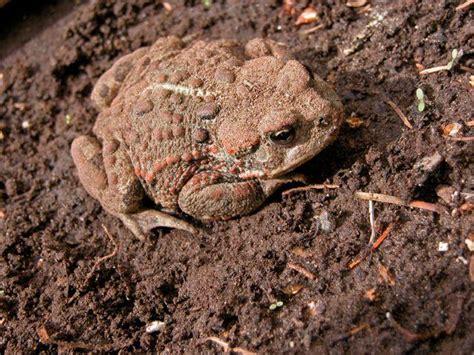 Garden Snakes Eat Get Rid Of Slugs Get Rid Of Snails Apps Directories