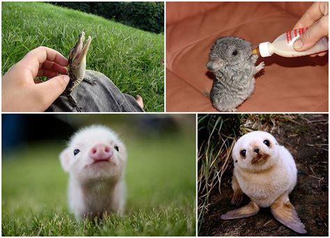 imagenes animales recien nacidos husmeando por la red 26 adorables cachorros en im 225 genes