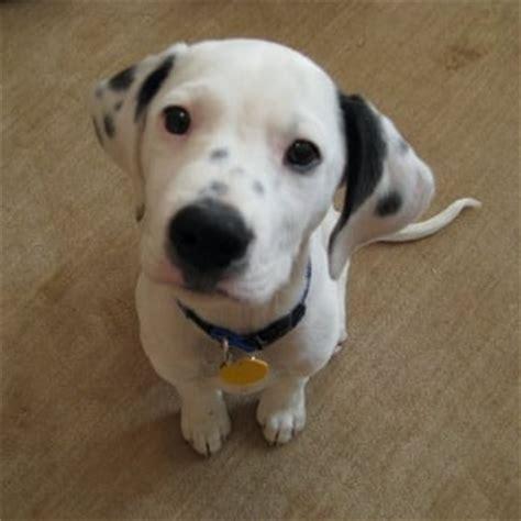 pound puppy rescue pound puppy rescue 19 photos pet services palo alto ca reviews yelp