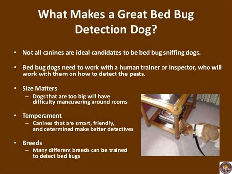 bed bugs on dogs using trained dogs to sniff out bed bugs