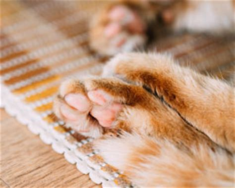 do dogs sweat through their paws how do cats sweat cathealth