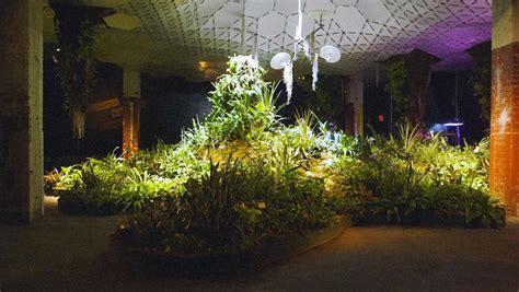 lab  plants learn  grow   dark