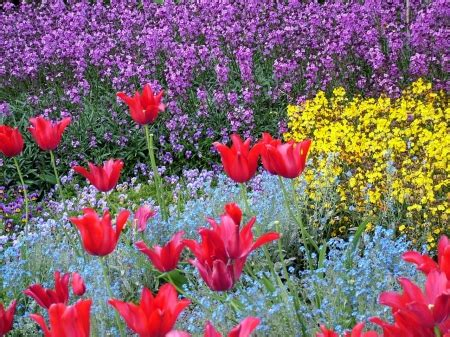 wallpaper flower mix flower mix other abstract background wallpapers on