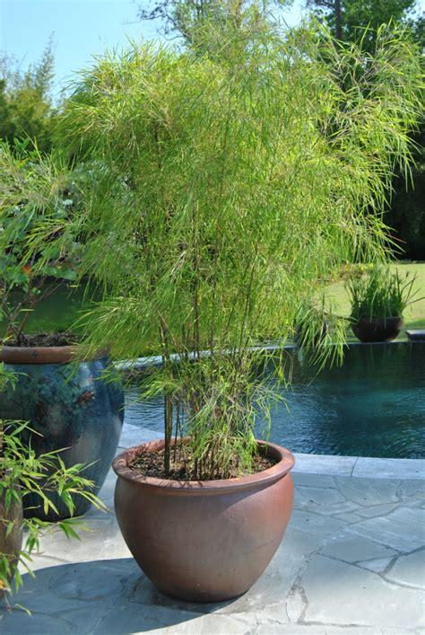 schöne pflegeleichte gartenpflanzen pflegeleichte pflanzen f 252 r den garten pflegeleichte