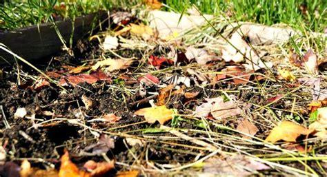 fall garden clean up garden clean up preparing your garden for winter