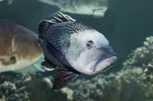 national aquarium 404