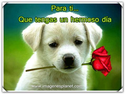 imagenes bonitas animadas buenos dias con imagenes bonitas de perrito con rosas
