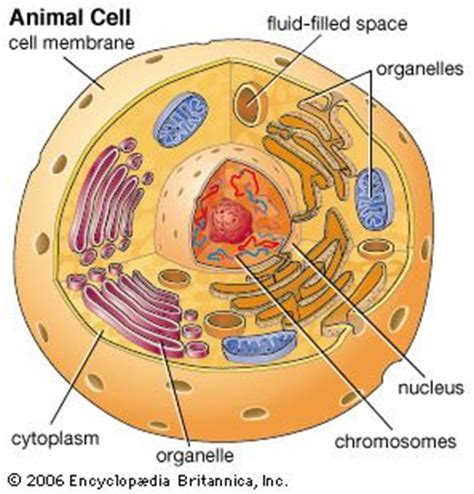Has A Cell Drawing by 10 Best Images About How To Learn About The Parts Of Plant
