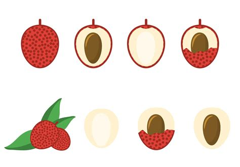 lychee fruit drawing free lychee vector download free vector art stock