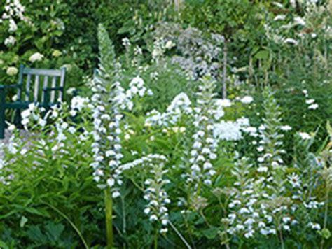 witte border bloemen een witte tuin hoe mooi kan dat staan in jouw tuin