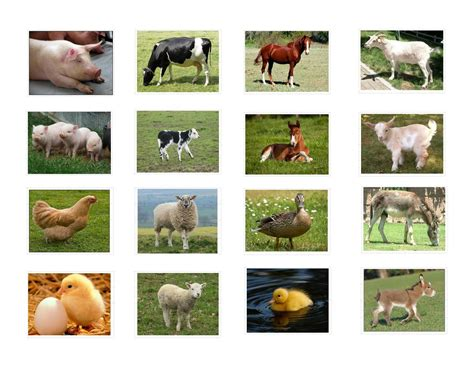 printable real animal flash cards real farm animals collage www pixshark com images