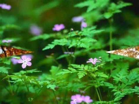 en guezel am resmi en g 252 zel doğa resimleri youtube