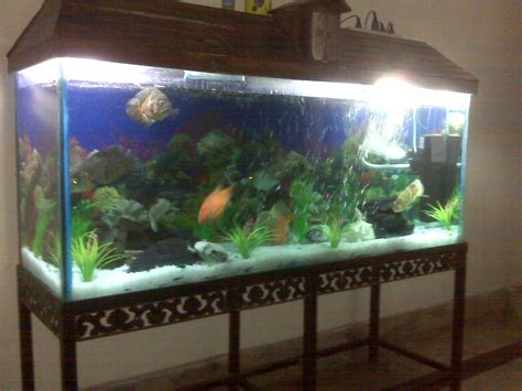 Fish Tank Bed Frame For Sale Aquarium Prices 650 Gallon Fish Tank Aquarium Bed 2017 Fish Tank Maintenance
