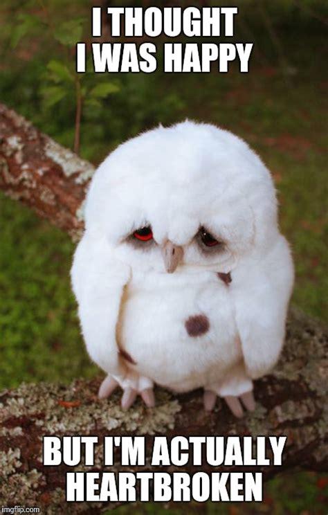 Heartbroken Meme - sad owl imgflip