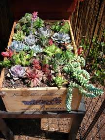 Succulent Container Gardens by Succulent Container Gardens Gardens