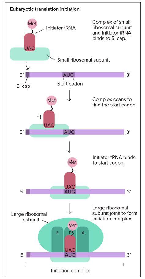 2017 04 24 biology gentetic poster assignment 1 biology