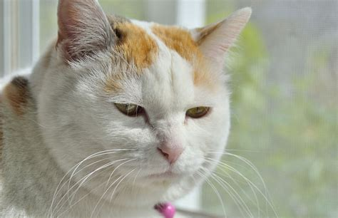 old cat disease cancer in old cats petcha