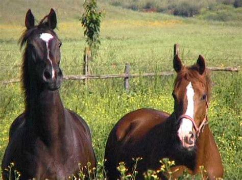 alimenti contenenti zinco e rame come mantenere lucido il pelo cavallo guide