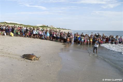 Detox Brevard County by Sea Turtle Release At The Brevard County Barrier Island