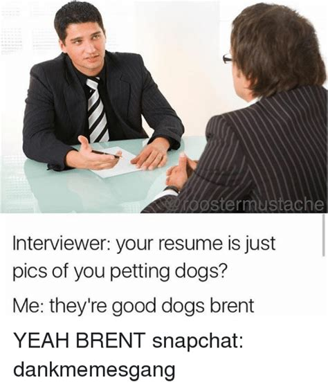 dogs brent 25 best memes about dogs brent dogs brent memes