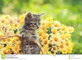 chaton dans le jardin avec des fleurs photo stock image