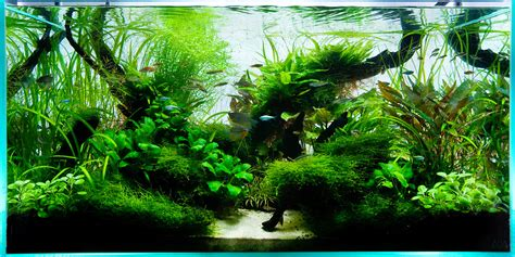 Aquascape Aquarium by 90cm Ada Aquascape Live Planted