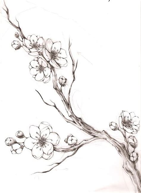 cherry blossom branch pencil drawing cement designs