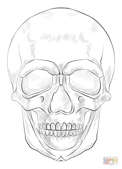human skull coloring page easy human skull drawing www imgkid com the image kid