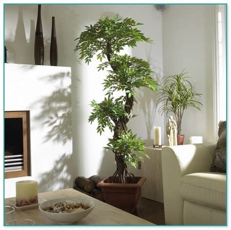decorative trees for the home caldera tub prices