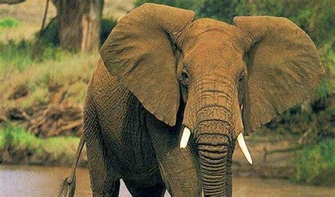 imagenes de animales la selva animales de la selva africana animalesde net