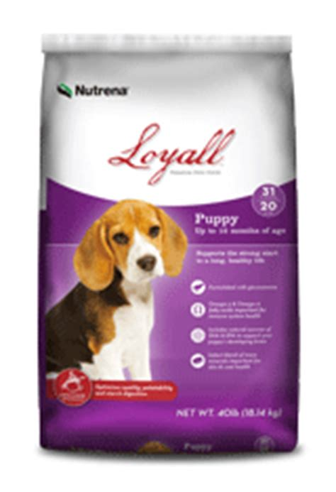 loyall puppy food welcome to bearpoint kennel