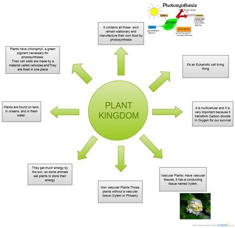 science flowchart science plant kingdom flowchart creately