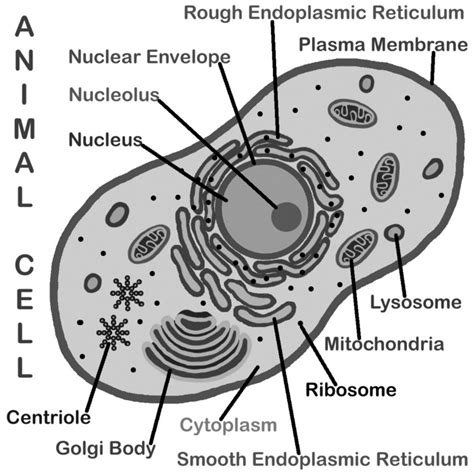 plant cell coloring page key 10 best images of looking inside cells worksheet answers