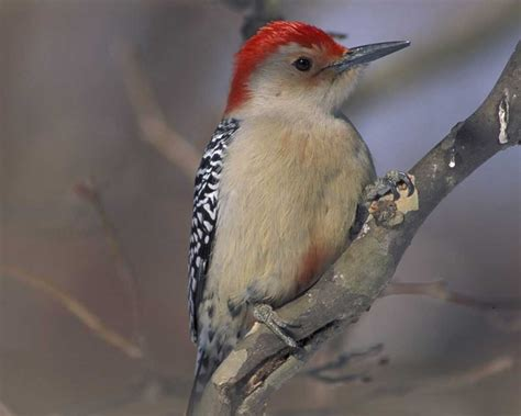 use zip code to attract birds to your yard earth earthsky