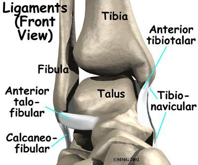 therapy northern virginia 49 best images about anatomy of the ankle on foot anatomy physical
